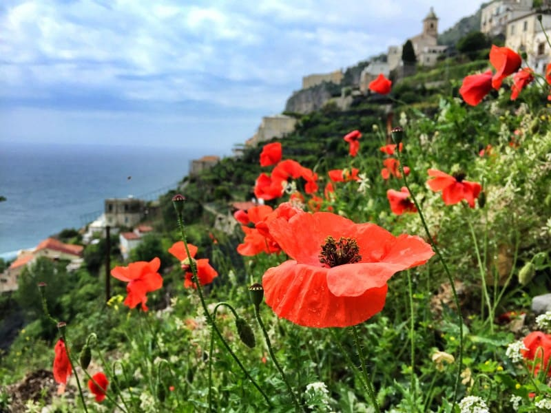 Amalfi Coast Hike Stage 3 red poppies and in the background the Amalfi Coast