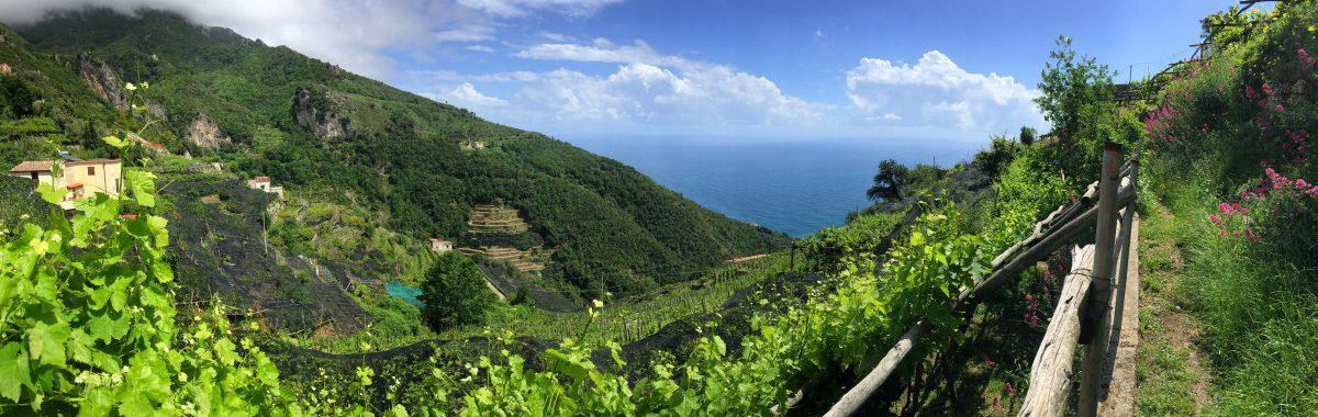 Amalfi hiking trail stage 1 The hiking trail leads past vineyards with a view of the sea