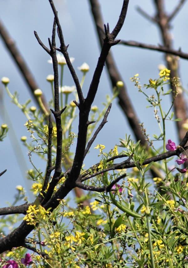 Blütenpracht an der Amalfiküste im Frühjahr