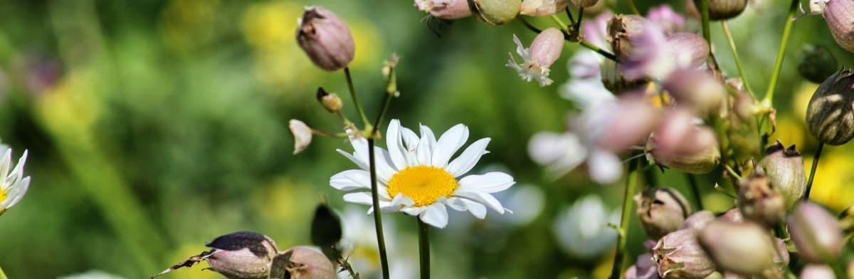 bela flora na costa de Amalfi